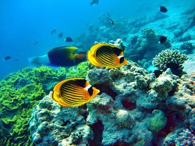 Makadi Bay In ägypten